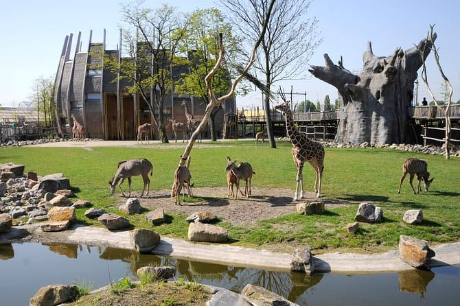 8- Rotterdam Zoo (Netherlands)