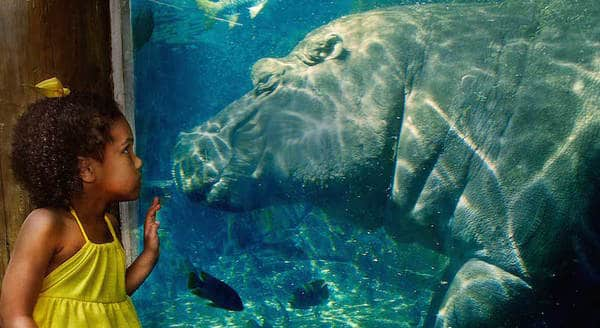 Top 10 Best Zoos In The World 2020: St. Louis Zoo (USA)