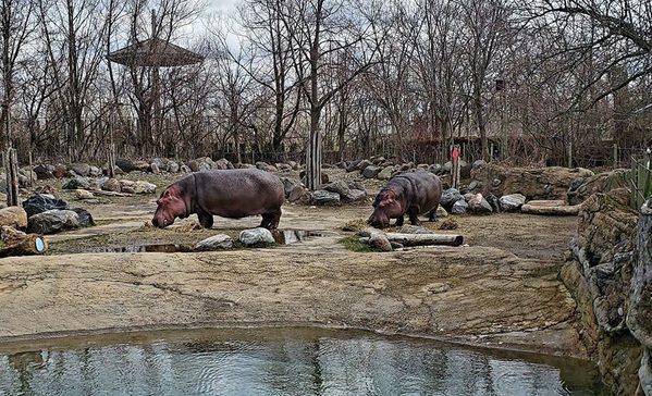 6- Toronto Zoo (Canada)