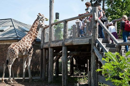 Top 10 Best Zoos In The World 2020: London Zoo