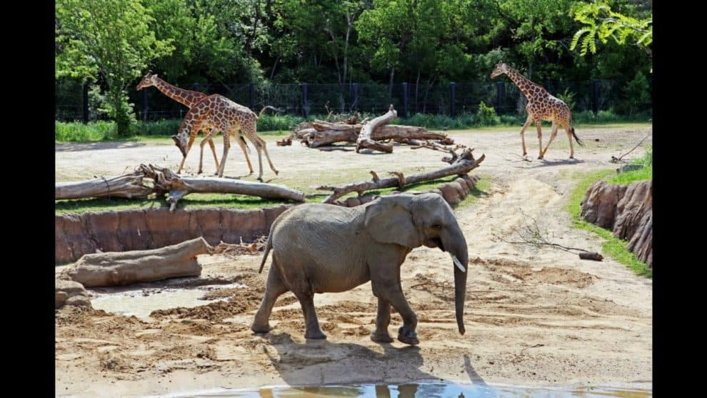 Top 10 Best Zoos In The World 2020