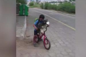 ecuador video boy puts mask dog