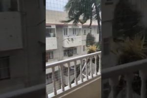Rain Storm Mumbai Swinging Tree Video