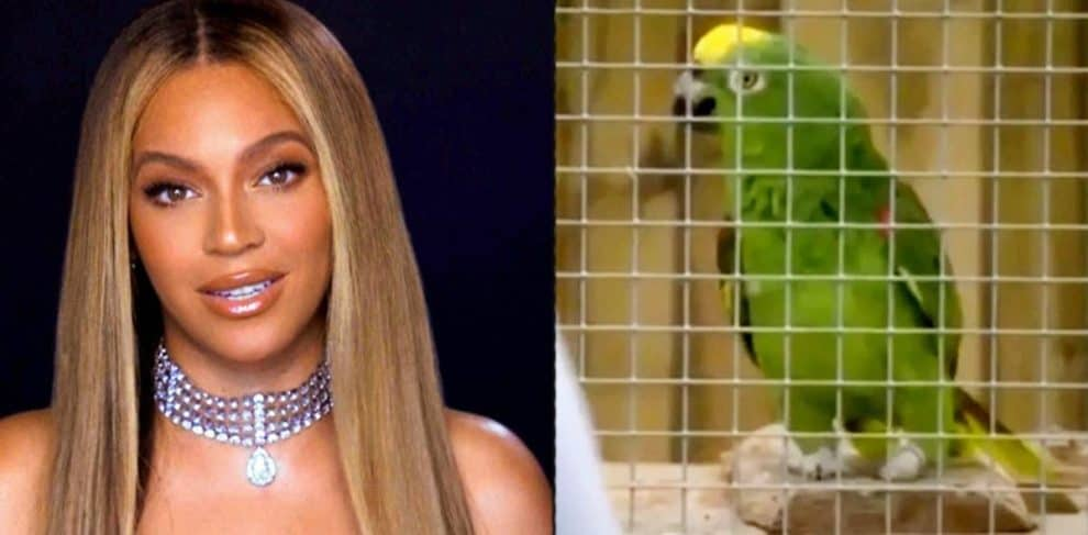 Parrot Singing Beyonce Song viral video