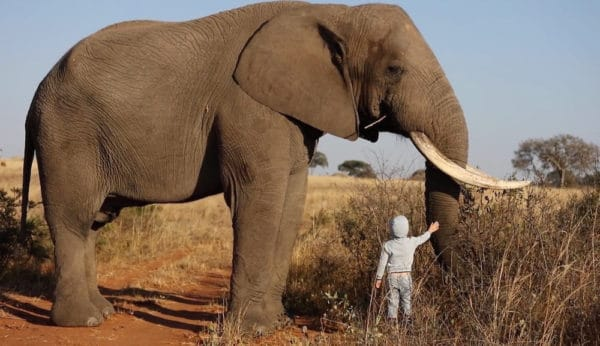 Top 10 Biggest Animals In The World: Elephant