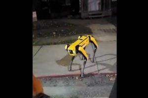 video Boston Dynamics robot dog Appear in public on street