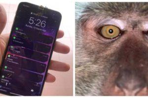 Video Malaysian Man Monkey Selfies on phone Zackrydz Rodzi