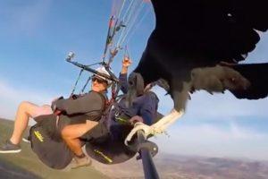 Paragliding vulture Spain Video paragliders