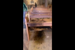 Israeli settler fire Gethsemane church jerusalem