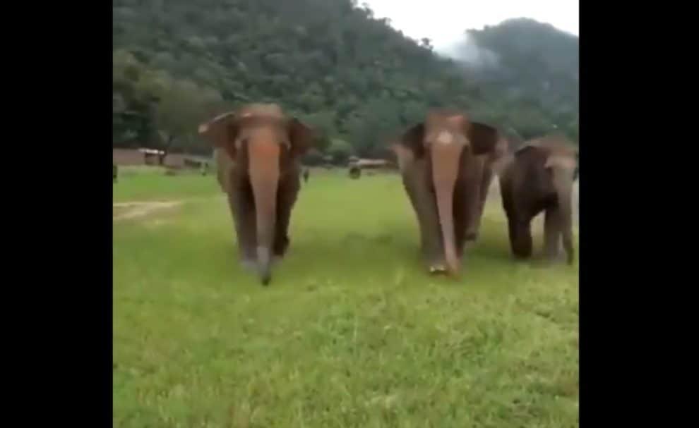 rescued elephants thailand voice caretaker