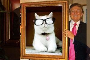 Catturd Trump Twitter retweet who is @catturd2
