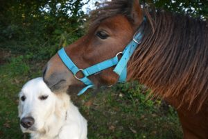 Poland retirement benefits police dogs and horses
