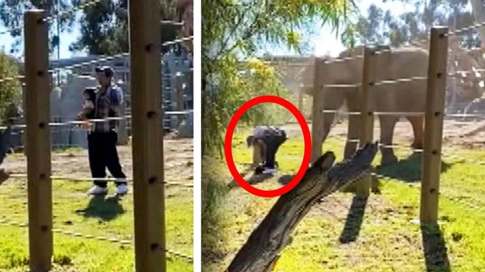 daughter elephant san diego zoo