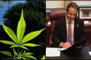 New York Marijuana possess grow