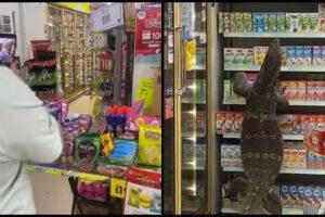giant lizard 7-eleven supermarket