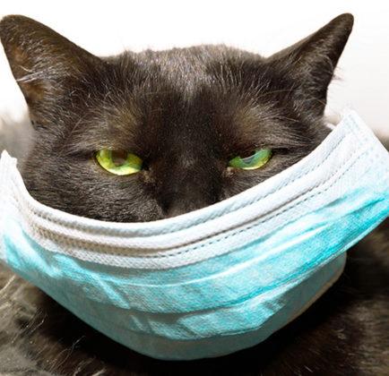 COVID-19 cats human transmission