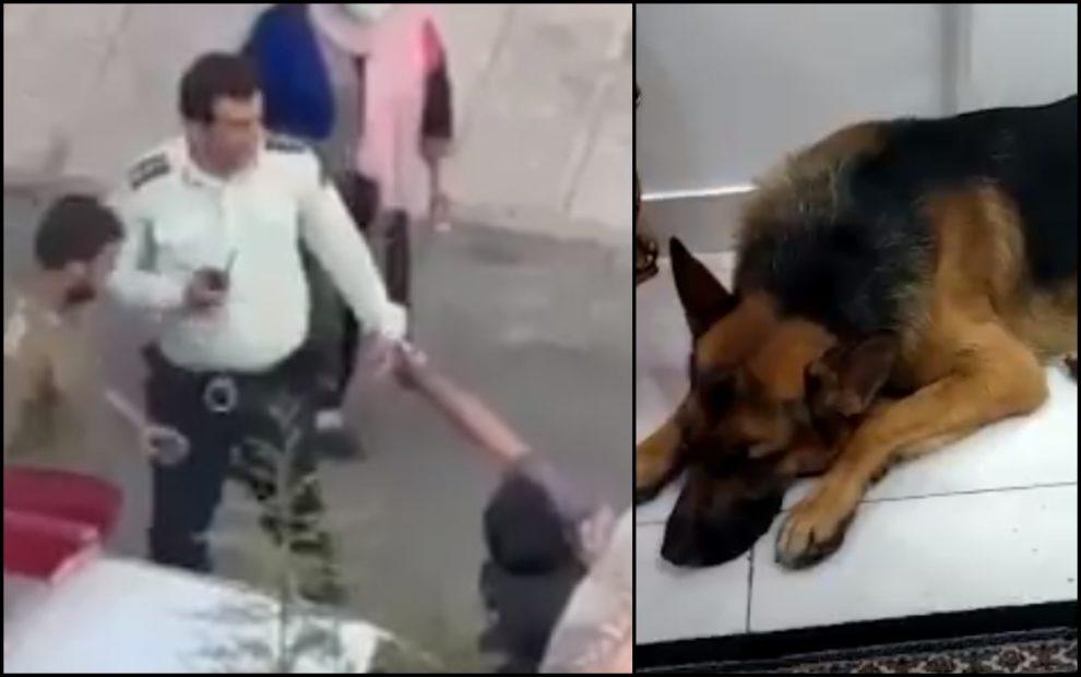 video iran dog Masih Alinejad