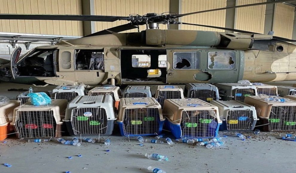 US service dogs left Afghanistan