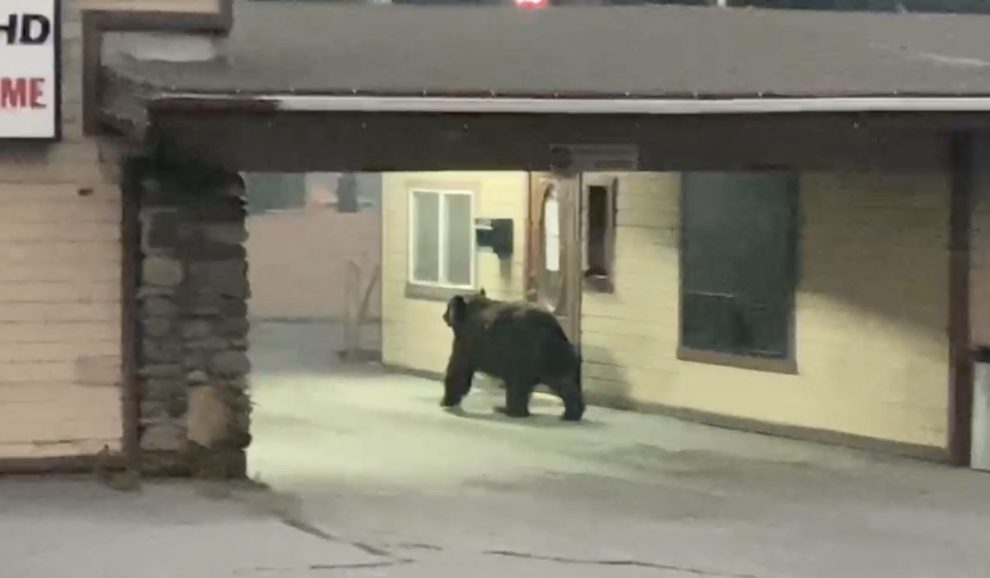 bears video south lake tahoe