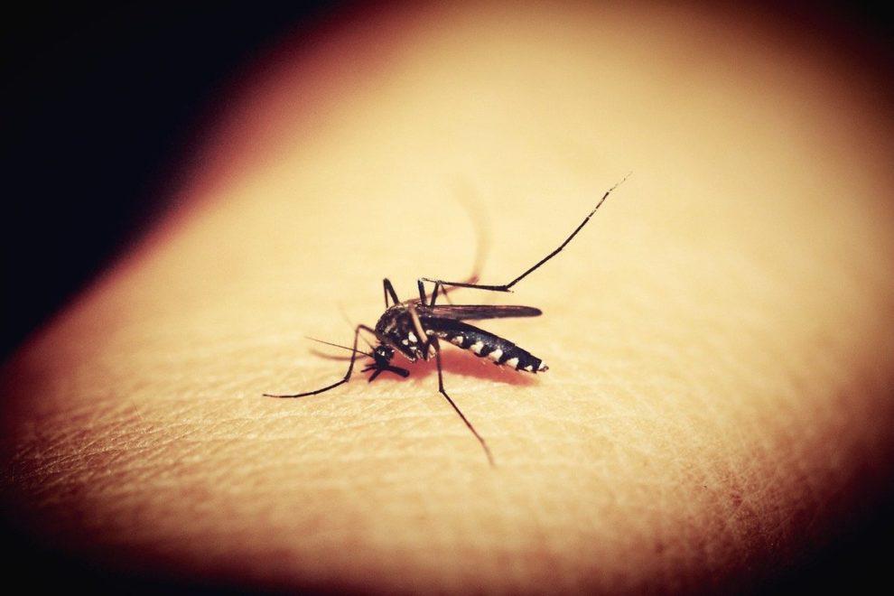 West Nile virus Meriden