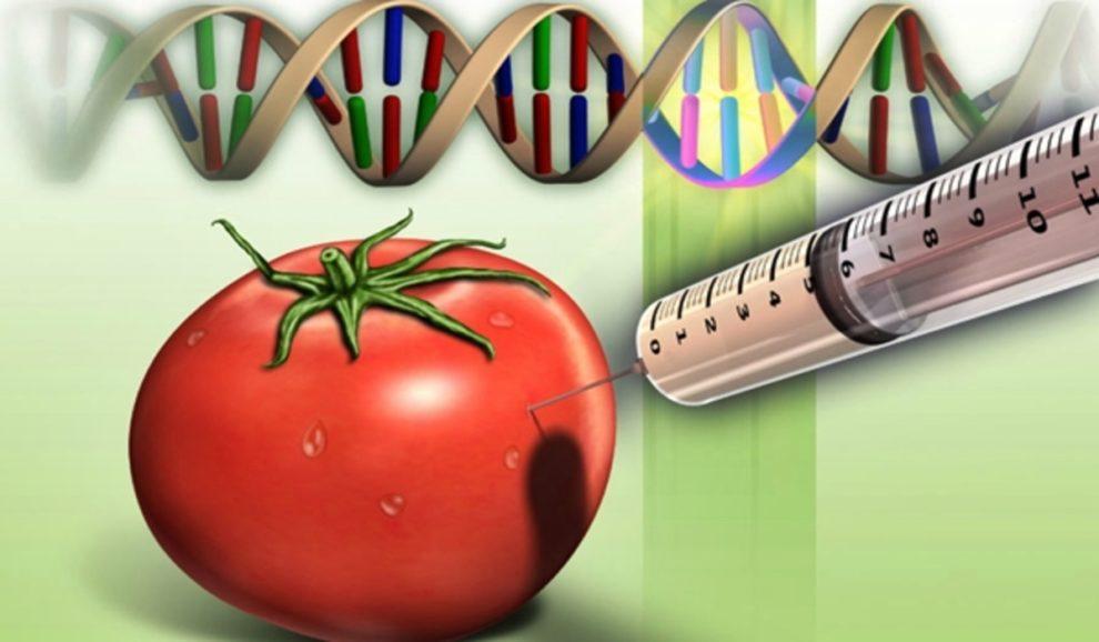 uzbekistan tomato vaccine COVID
