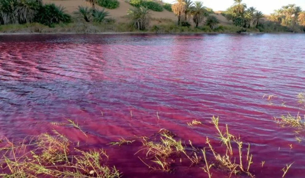 dead sea water blood red COLOR