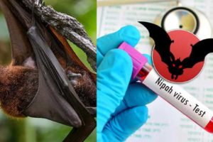Nipah Virus India vaccine symptoms testing