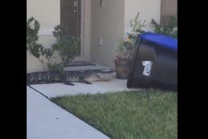 Florida Abdul Malik video alligator trash can