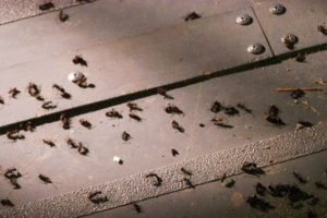 swarm ants air india plane