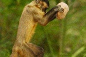 monkey killed man delhi india
